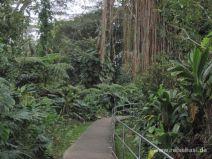 Weg zu den Akaka Falls auf Big Island