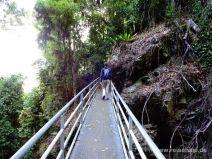 Wandern im Dorrigo Nationalpark