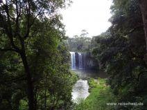 Dangar Falls im Dorrigo Nationalpark