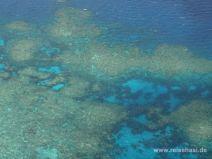 Leuchtendes Blau zwischen den Korallen