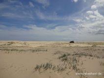 Gräser in der Dünenlandschaft