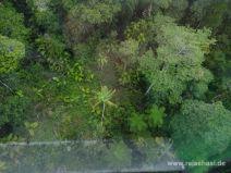 In der Gondel über dem Regenwald