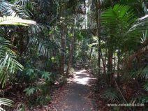 Wanderweg durch tropischen Wald