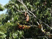 Früchte und Blüten in der Baumkrone