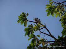 Vögel kuscheln zu Dritt