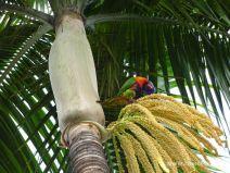 Akrobatischer Vogel