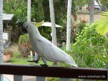 Kakadu stolziert auf unserem Balkon