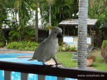Kakadu in der Hotelanlage