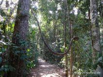 Wanderweg im Eungella Nationalpark