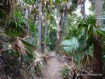 Palmenwald im Nationalpark