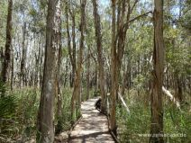 Stegweg im Nationalpark