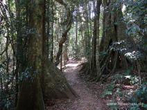 Rainforest Circuit im Lamington Nationalpark