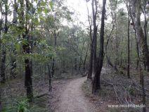 Wandern auf dem Rainforest Circuit