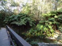 Weg zu den Purlingbrook Falls