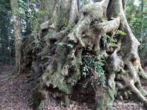 Interessanter Baum am Weg