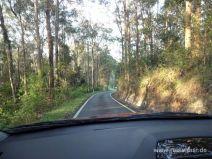 Schmale Straße im Springbrook Nationalpark