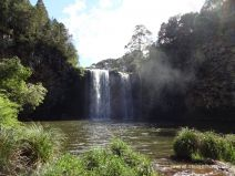 Dangar Falls im Dorrigo Nationalpark