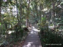 Weg zu den Dangar Falls