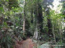 Asphaltierter Weg im Regenwald