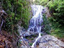Tristania Falls im Dorrigo Nationalpark