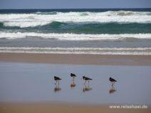 Vögel spazieren an der Wasserkante