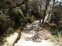 Treppenstufen auf dem Weg zu den Wentworth Falls