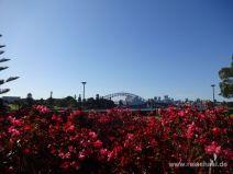 Opernhaus und Harbour Bridge vom Botanischen Garten aus
