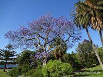 Im Botanischen Garten von Sydney
