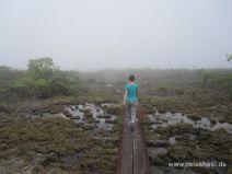 Auf dem Alakai Swamp Trail auf Kauai