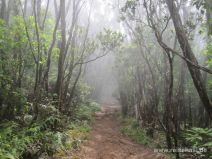 Märchenwald am Alakai Swamp Trail auf Kauai