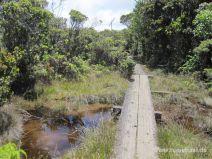 Stege auf dem Alakai Swamp Trail auf Kauai