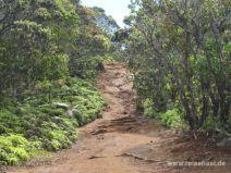 Alakai Swamp Trail auf Kauai
