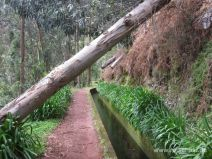 Im Eukalyptuswald entlang der Levada da Janela