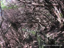 Im Lorbeerwald entlang der Levada das 25 Fontes