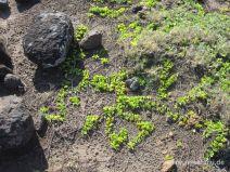 Pflänzchen auf kargem Boden