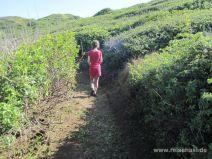 Wanderweg in den Büschen