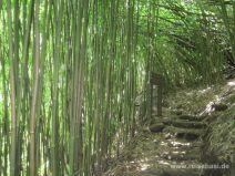 Treppauf im Bambuswald