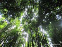 Blick nach oben im Bambuswald