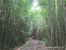 Weg zwischen Bambus