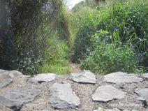 Der Weg zu den Venus Ponds hinter der Mauer