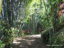 Weg im Garden of Eden auf Maui