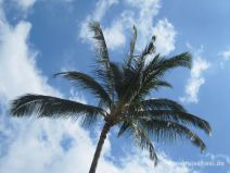 Palme am Wailea Beach