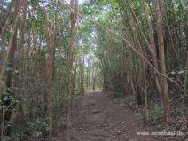 Wurzeliger Weg im Wald