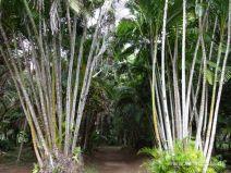 Bambustunnel