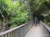 Wanderung im kühlen Wald