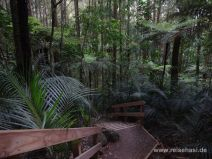 Weg im Memorial Kauri Park
