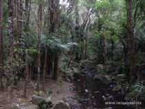 Dichter Wald - Memorial Kauri Park