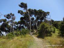 Wanderweg auf Urupukapuka Island