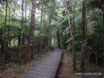 Stegweg im Wald
