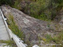 Freigelegter Stamm eines Kauribaumes